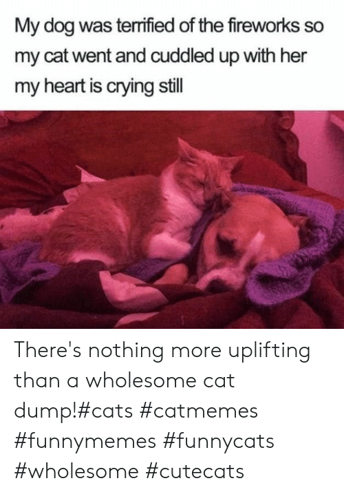 Fireworks: My dog was terrified of the fireworks so  my cat went and cuddled up with her  my heart is crying still There's nothing more uplifting than a wholesome cat dump!#cats #catmemes #funnymemes #funnycats #wholesome #cutecats
