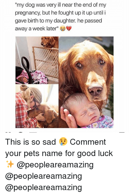 """Memes, Pets, and Good: """"my dog was very ill near the end of my  pregnancy, but he fought up it up until i  gave birth to my daughter. he passed  away a week later"""" This is so sad 😢 Comment your pets name for good luck ✨ @peopleareamazing @peopleareamazing @peopleareamazing"""