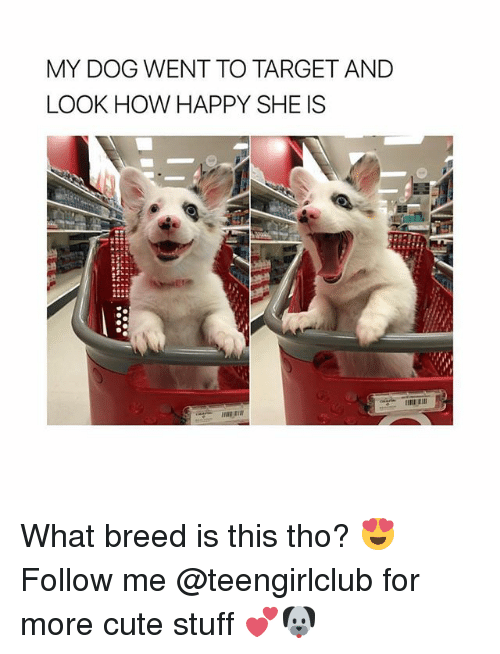 Cute, Target, and Girl: MY DOG WENT TO TARGET AND  LOOK HOW HAPPY SHE IS What breed is this tho? 😍 Follow me @teengirlclub for more cute stuff 💕🐶