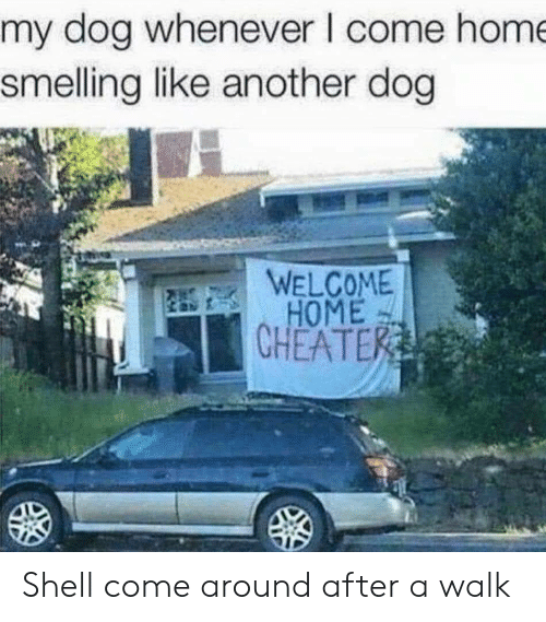 welcome-home: my dog whenever I come hom  smelling like another dog  WELCOME  HOME  CHEATE Shell come around after a walk