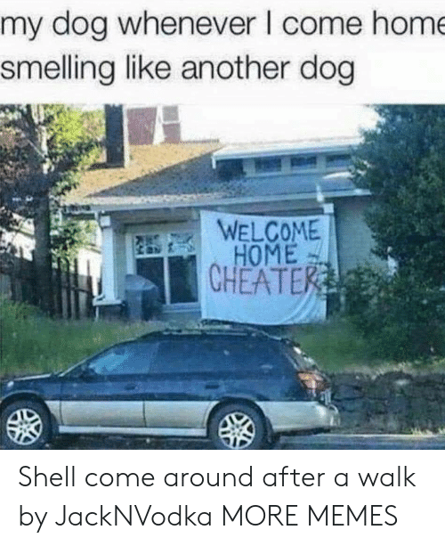 welcome-home: my dog whenever I come hom  smelling like another dog  WELCOME  HOME  CHEATE Shell come around after a walk by JackNVodka MORE MEMES
