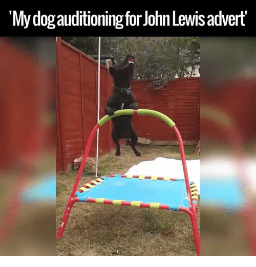 "Adverted: ""My dogauditioning for John Lewis advert"
