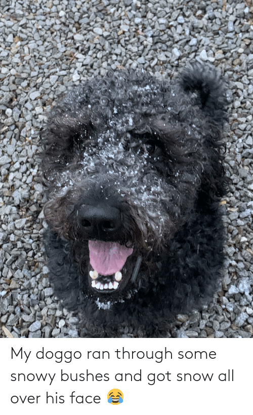 bushes: My doggo ran through some snowy bushes and got snow all over his face 😂