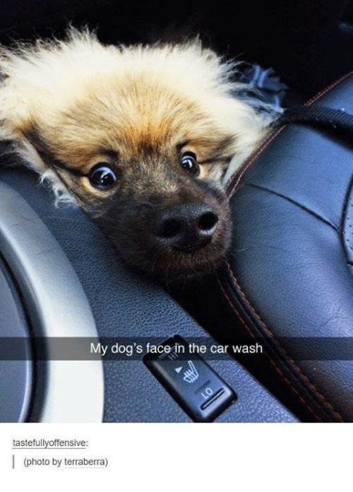 Dog Faces: My dog's face in the car wash  tastefully offensive:  (photo by terraberra)