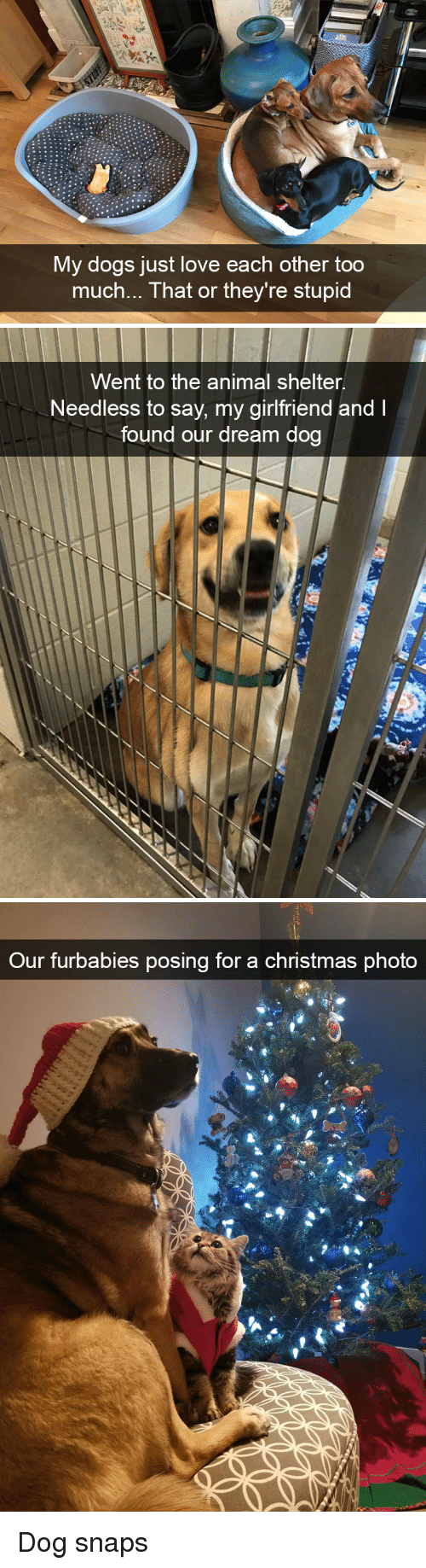 needless: My dogs just love each other too  much... That or they're stupid   Went to the animal shelter.  Needless to say, my girlfriend and I  found our dream dog   Our furbabies posing for a christmas phota Dog snaps