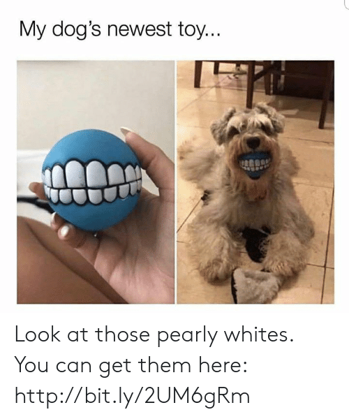 pearly: My dog's newest toy. Look at those pearly whites. You can get them here: http://bit.ly/2UM6gRm