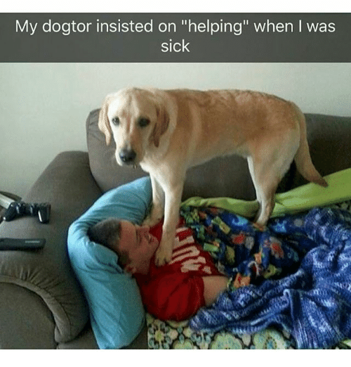 "Memes, Sick, and 🤖: My dogtor insisted on ""helping"" when I was  sick"