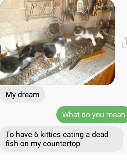 Dead fish meme pictures to pin on pinterest pinsdaddy for What does it mean to dream about fish