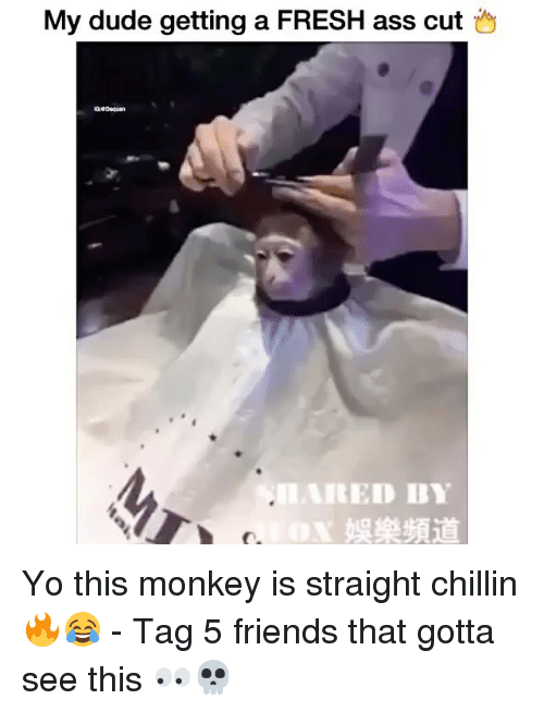 Straight Chillin: My dude getting a FRESH ass cut  RED BY Yo this monkey is straight chillin 🔥😂 - Tag 5 friends that gotta see this 👀💀
