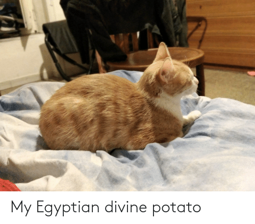 Egyptian: My Egyptian divine potato