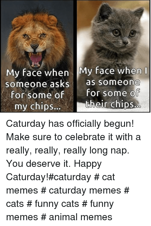 My Face When: My face when My face when  someone asks as someone  for some ofFor some o  their chips.  my chipS... Caturday has officially begun! Make sure to celebrate it with a really, really, really long nap. You deserve it. Happy Caturday!#caturday # cat memes # caturday memes # cats # funny cats # funny memes # animal memes