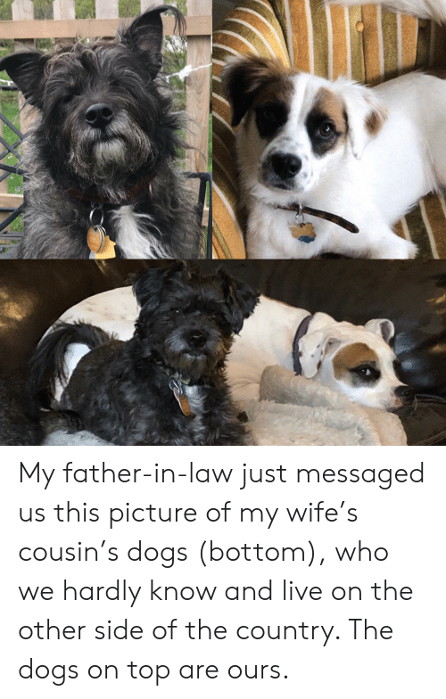 Picture Of My Wife: My father-in-law just messaged us this picture of my wife's cousin's dogs (bottom), who we hardly know and live on the other side of the country. The dogs on top are ours.