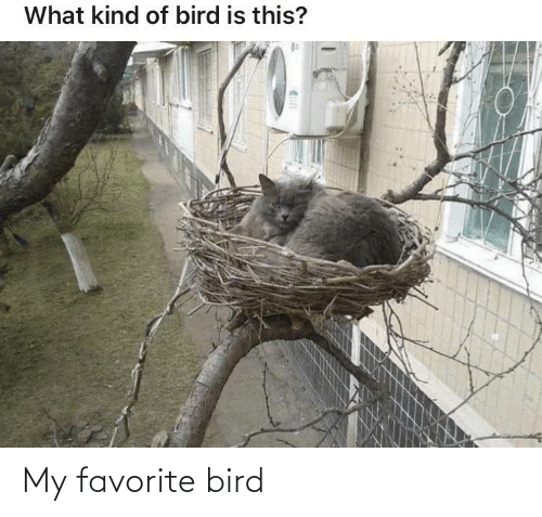 bird: My favorite bird