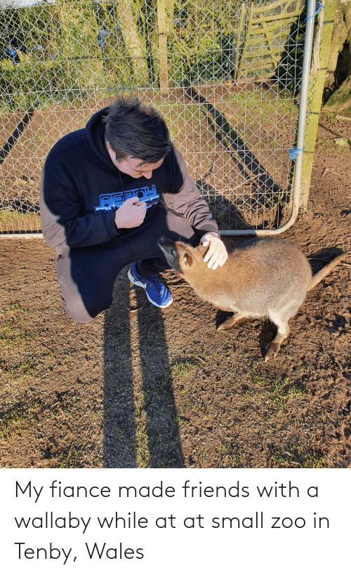 AT-AT: My fiance made friends with a wallaby while at at small zoo in Tenby, Wales