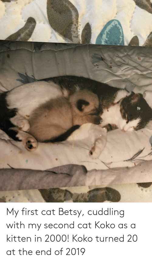 koko: My first cat Betsy, cuddling with my second cat Koko as a kitten in 2000! Koko turned 20 at the end of 2019