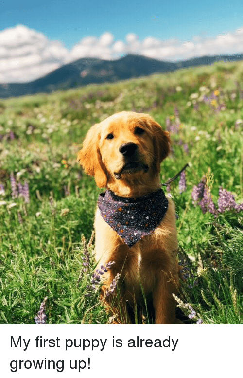 Growing Up, Puppy, and First
