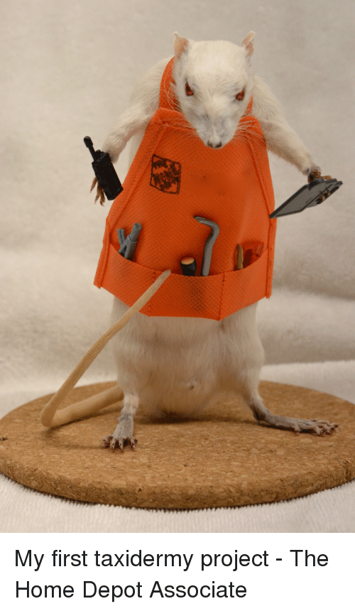 Funny, Home Depot, and The Home Depot: My first taxidermy project - The Home Depot Associate