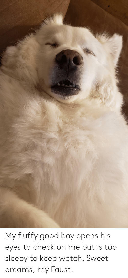 fluffy: My fluffy good boy opens his eyes to check on me but is too sleepy to keep watch. Sweet dreams, my Faust.
