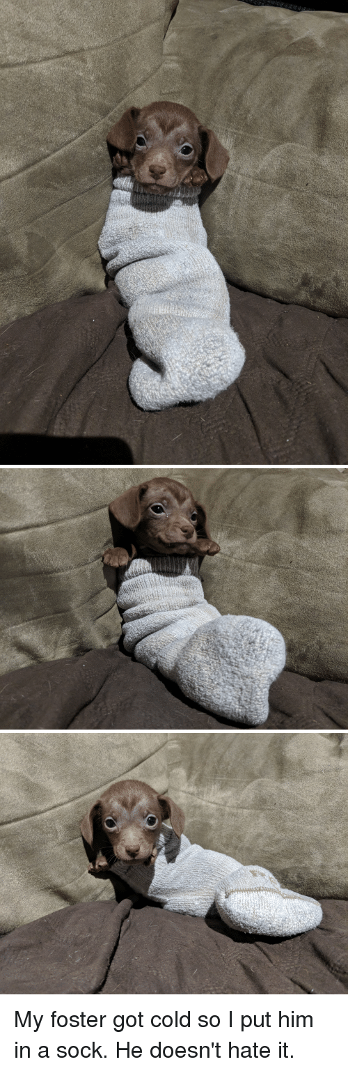 Sock: My foster got cold so I put him in a sock. He doesn't hate it.
