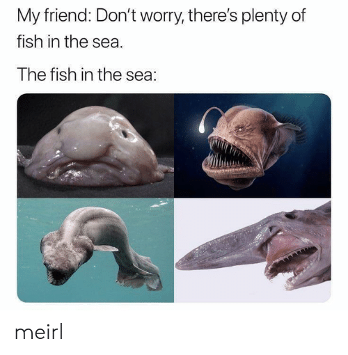 Plenty of Fish: My friend: Don't worry, there's plenty of  fish in the sea  The fish in the sea: meirl