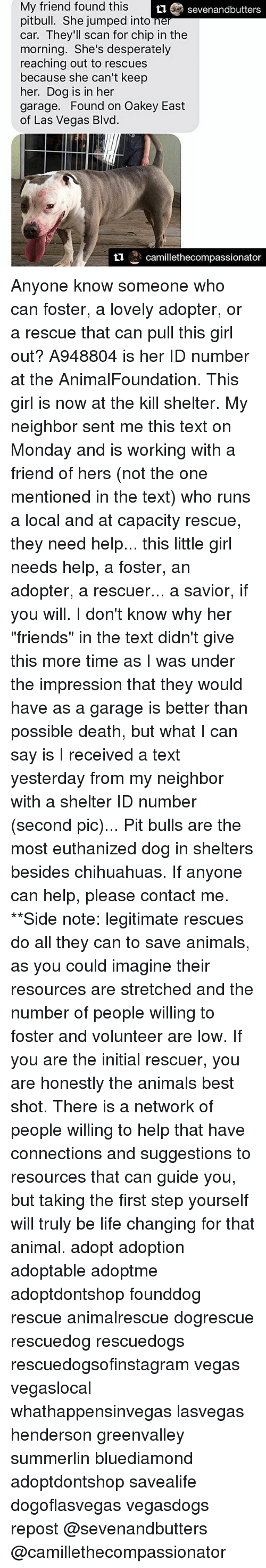 """Oakey: My friend found this  Sevenandbutters  pitbull. She jumped into  car. They'll scan for chip in the  morning. She's desperately  reaching out to rescues  because she can't keep  her. Dog is in her  garage. Found on Oakey East  of Las Vegas Blvd.  ti  camillethecompassionator Anyone know someone who can foster, a lovely adopter, or a rescue that can pull this girl out? A948804 is her ID number at the AnimalFoundation. This girl is now at the kill shelter. My neighbor sent me this text on Monday and is working with a friend of hers (not the one mentioned in the text) who runs a local and at capacity rescue, they need help... this little girl needs help, a foster, an adopter, a rescuer... a savior, if you will. I don't know why her """"friends"""" in the text didn't give this more time as I was under the impression that they would have as a garage is better than possible death, but what I can say is I received a text yesterday from my neighbor with a shelter ID number (second pic)... Pit bulls are the most euthanized dog in shelters besides chihuahuas. If anyone can help, please contact me. **Side note: legitimate rescues do all they can to save animals, as you could imagine their resources are stretched and the number of people willing to foster and volunteer are low. If you are the initial rescuer, you are honestly the animals best shot. There is a network of people willing to help that have connections and suggestions to resources that can guide you, but taking the first step yourself will truly be life changing for that animal. adopt adoption adoptable adoptme adoptdontshop founddog rescue animalrescue dogrescue rescuedog rescuedogs rescuedogsofinstagram vegas vegaslocal whathappensinvegas lasvegas henderson greenvalley summerlin bluediamond adoptdontshop savealife dogoflasvegas vegasdogs repost @sevenandbutters @camillethecompassionator"""