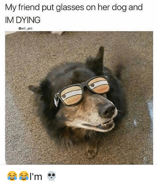 Memes, Glasses, and 🤖: My friend put glasses on her dog and  IM DYING  @will ent 😂😂I'm 💀