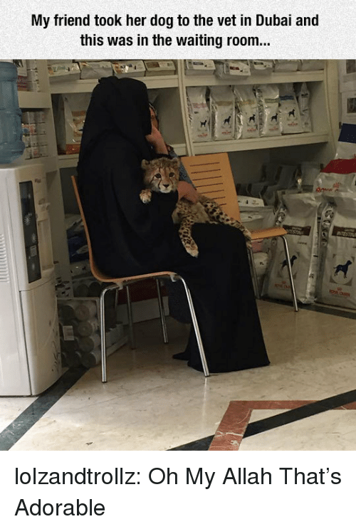allah: My friend took her dog to the vet in Dubai and  this was in the waiting room... lolzandtrollz:  Oh My Allah That's Adorable