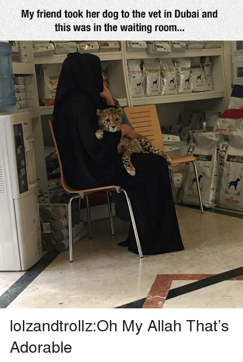 allah: My friend took her dog to the vet in Dubai and  this was in the waiting room... lolzandtrollz:Oh My Allah That's Adorable