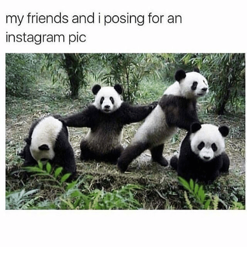 Friends, Instagram, and Girl Memes: my friends and i posing for an  instagram pic