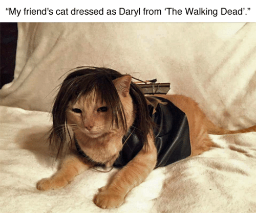 "Friend Cat: ""My friend's cat dressed as Daryl from The Walking Dead'"