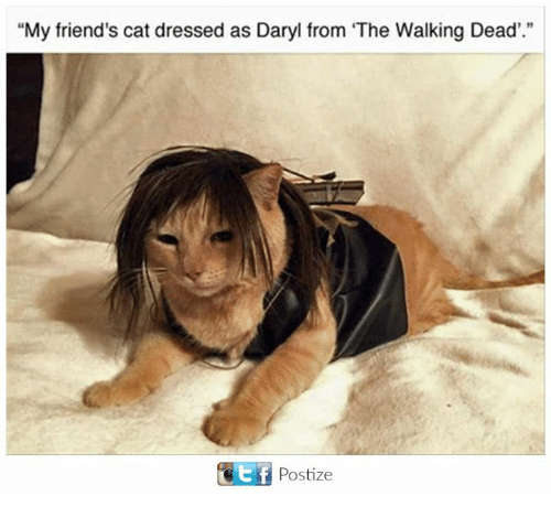 """Friends, Memes, and The Walking Dead: """"My friend's cat dressed as Daryl from The Walking Dead'.""""  t f  Postize"""
