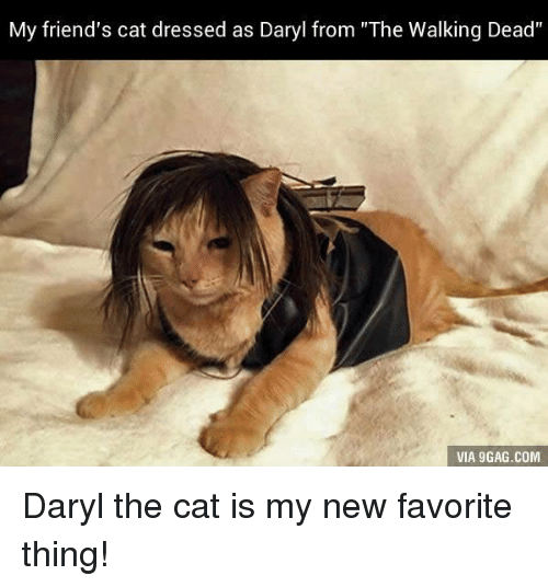 "Friend Cat: My friend's cat dressed as Daryl from ""The Walking Dead'  VIA 9GAG.COM Daryl the cat is my new favorite thing!"