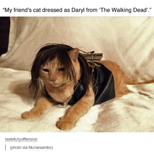 "Friend Cat: ""My friend's cat dressed as Daryl from The Walking Dead'.""  tastefully offensive  (photo via Nursesambo)"
