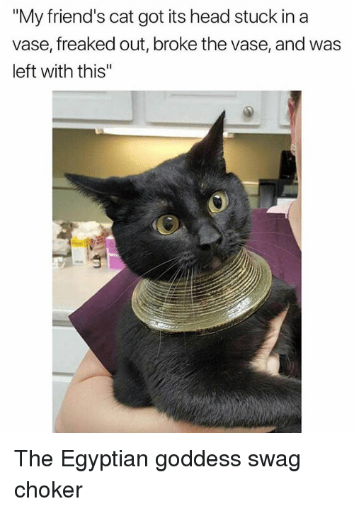 """Choker: """"My friend's cat got its head stuck in a  vase, freaked out, broke the vase, and was  left with this"""" The Egyptian goddess swag choker"""