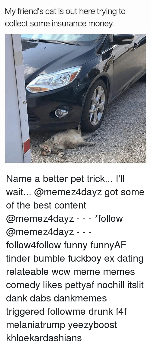The Dab, Dank, and Dating: My friend's cat is out here trying to  collect some insurance money. Name a better pet trick... I'll wait... @memez4dayz got some of the best content @memez4dayz - - - *follow @memez4dayz - - - follow4follow funny funnyAF tinder bumble fuckboy ex dating relateable wcw meme memes comedy likes pettyaf nochill itslit dank dabs dankmemes triggered followme drunk f4f melaniatrump yeezyboost khloekardashians