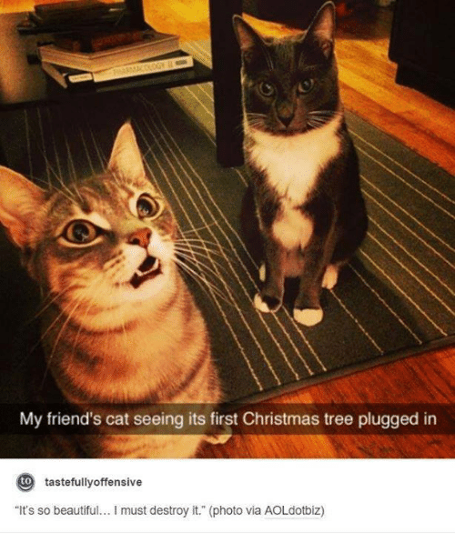 "Friend Cat: My friend's cat seeing its first Christmas tree plugged in  to  tastefully offensive  ""It's so beautiful... must destroy it."" (photo via AOLdotbiz)"