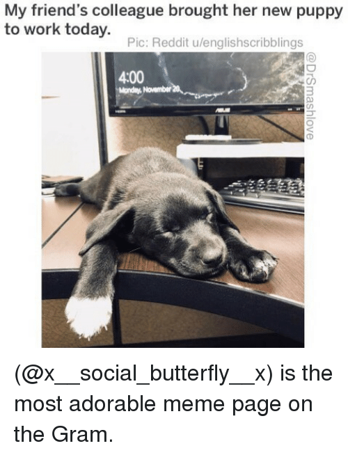 Friends, Meme, and Memes: My friend's colleague brought her new puppy  to work today.  Pic: Reddit u/englishscribblings  4:00  November (@x__social_butterfly__x) is the most adorable meme page on the Gram.