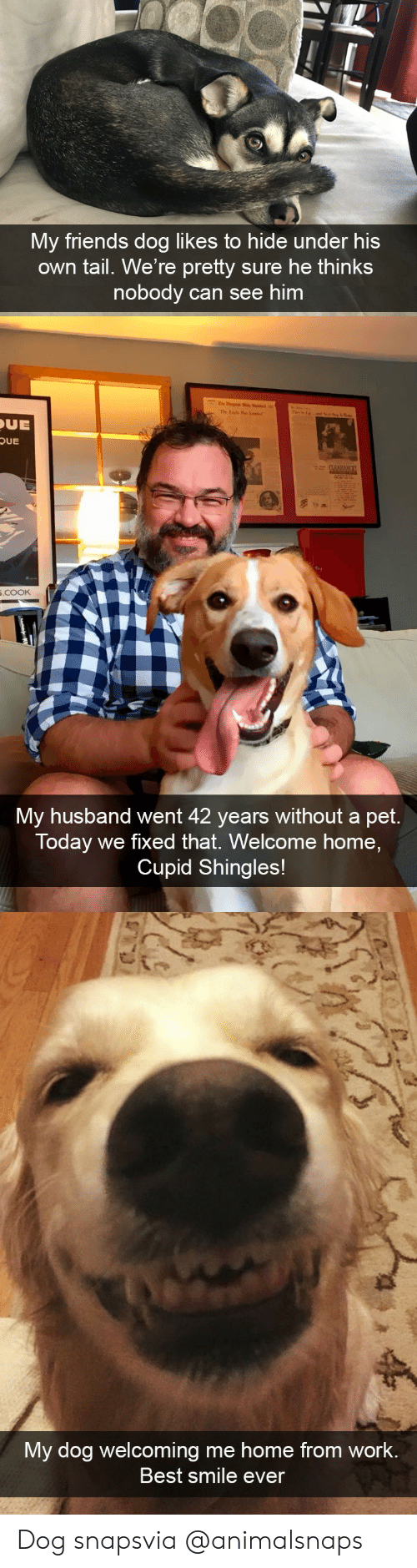welcome-home: My friends dog likes to hide under his  own tail. We're pretty sure he thinks  nobody can see him   UE  OUE  .cooK  My husband went 42 years without a pet.  Today we fixed that. Welcome home,  Cupid Shingles!   My dog welcoming me home from work  Best smile ever Dog snapsvia @animalsnaps