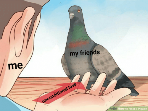 unconditional love: my friends  me  unconditional love  wiki How to Hold a Pigeon