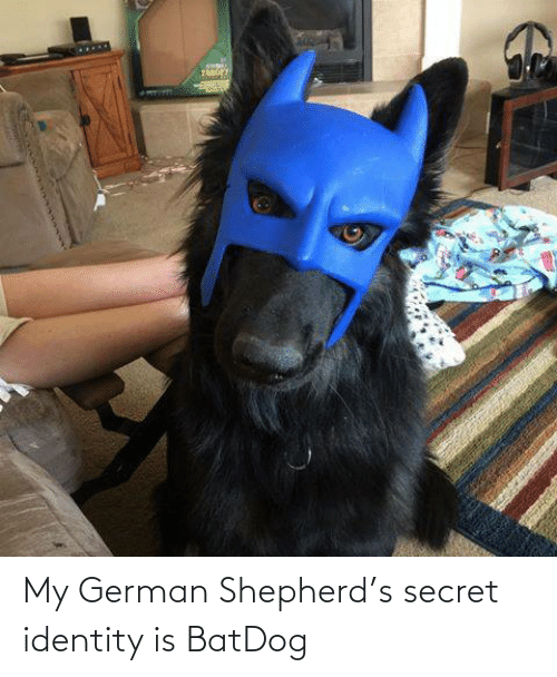 german: My German Shepherd's secret identity is BatDog