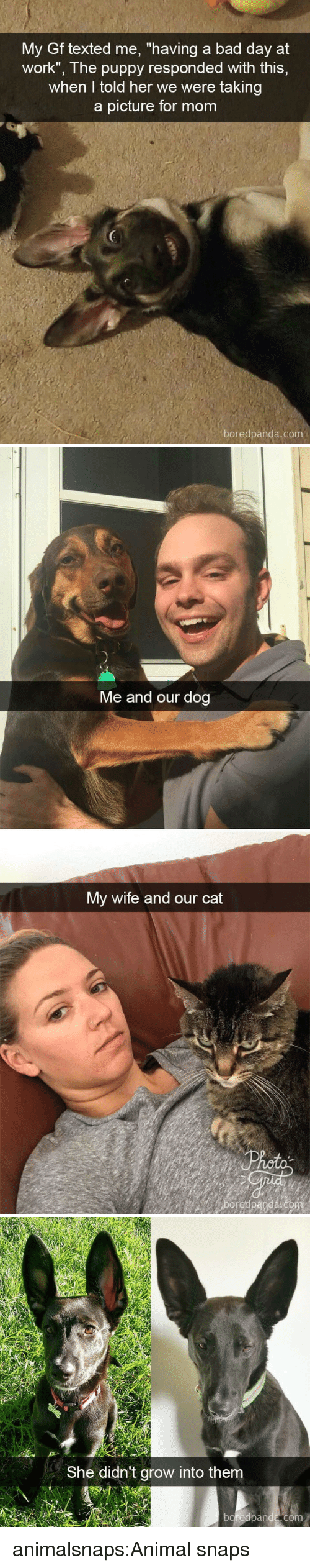 """Taking A Picture: My Gf texted me, """"having a bad day at  work"""", The puppy responded with this,  when I told her we were taking  a picture for mom  boredpanda.com   Me and our dog  My wife and our cat   She didn't grow into them  boreapanda,com animalsnaps:Animal snaps"""