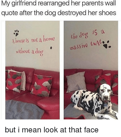 quots: My girlfriend rearranged her parents wall  quote after the dog destroyed her shoes  A house is not a home the dog is a  massive twAt.  without a do but i mean look at that face