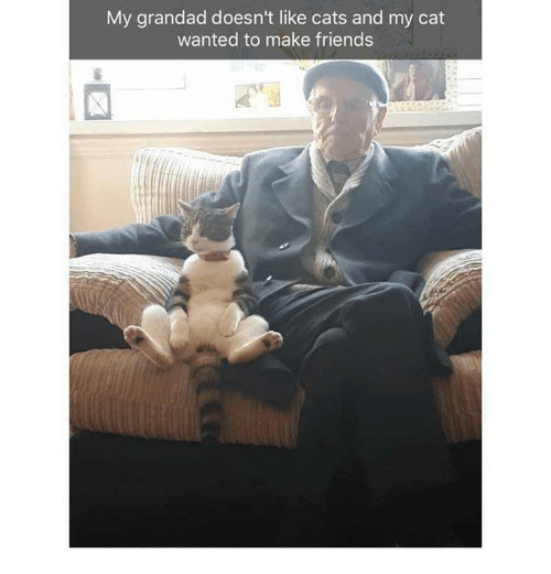 Cats, Friends, and Memes: My grandad doesn't like cats and my cat  wanted to make friends