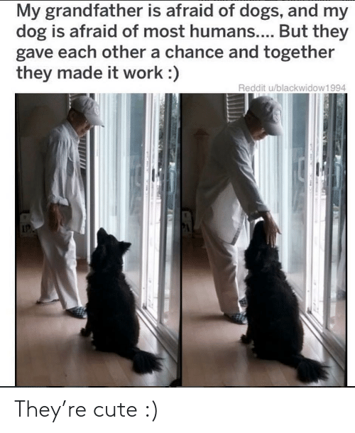 afraid: My grandfather is afraid of dogs, and my  dog is afraid of most humans.... But they  gave each other a chance and together  they made it work :)  Reddit u/blackwidow1994 They're cute :)