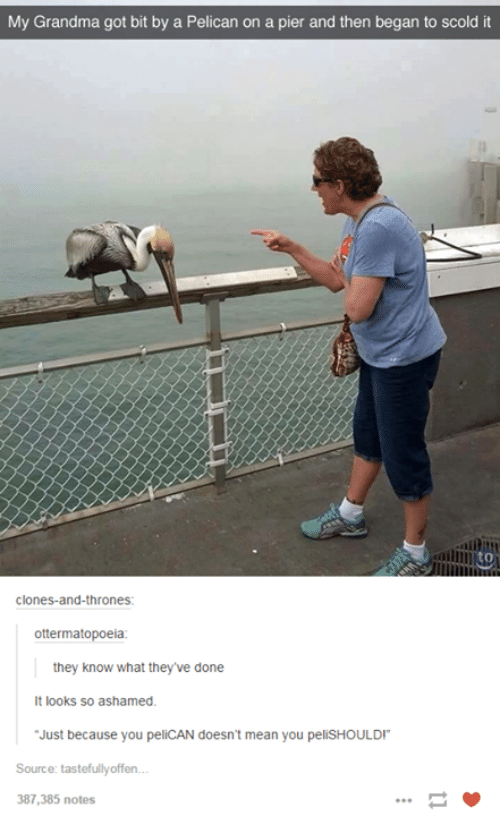 """Grandma, Mean, and Meaning: My Grandma got bit by a Pelican on a pier and then began to scold it  Clones-and-thrones  ottermatopoeia  they know what they've done  It looks so ashamed.  """"Just because you peliCAN doesn't mean you pelishOULDI""""  Source: tastefully offen...  387,385 notes"""