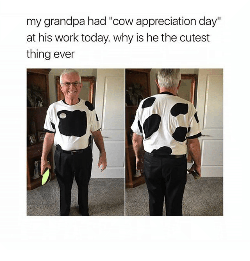 """Memes, Work, and Grandpa: my grandpa had """"cow appreciation day  at his work today. why is he the cutest  thing ever"""