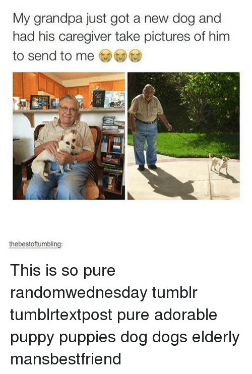 Memes, 🤖, and Pure: My grandpa just got a new dog and  had his caregiver take pictures of him  to send to me  thebestoftumbling: This is so pure randomwednesday tumblr tumblrtextpost pure adorable puppy puppies dog dogs elderly mansbestfriend