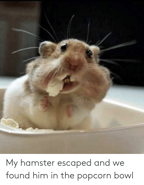 Hamster, Popcorn, and Bowl: My hamster escaped and we found him in the popcorn bowl