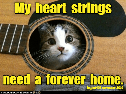 heart strings: My heart strings  need a forever home.  bajio6401 november 2019  ICANHASCHEEZBURGER.COM