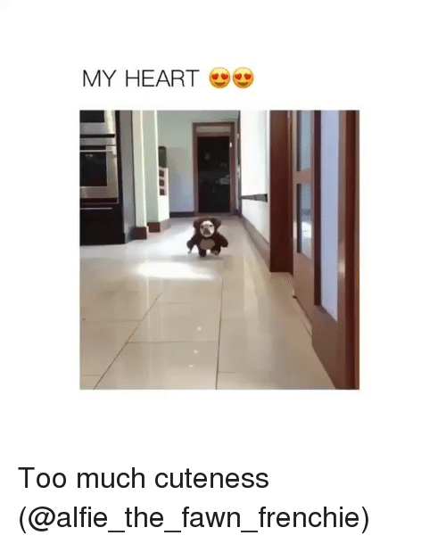 Frenchie: MY HEART Too much cuteness (@alfie_the_fawn_frenchie)